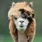 User avatar for HCollider1