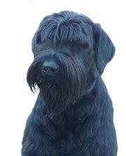 User avatar for Peter Cedergren