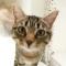User avatar for PootleCat