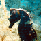 User avatar for Annakacat