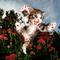 User avatar for Oneiroi