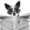 User avatar for Newzie