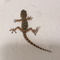 User avatar for Lidoswimmer
